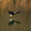 30  G Eagle Fishing