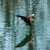23  G Eagle Fishing V