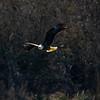 20  G Eagle Fishing