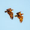 20  G Juvenille Eagles