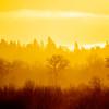 28  G Sunrise Trees