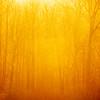 22  G Sunrise Trees