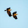 21  G Juvenille Eagles