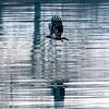 1  G Juvenille Eagle V