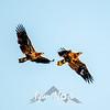 19  G Juvenille Eagles
