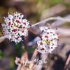 10  G White Flower Close