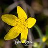 40  G Yellow Flower