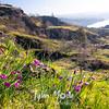35  G Grass Widows and View
