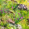 34  G Grass Widows
