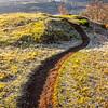 13  G Frosty Trail V