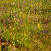36  G Yellow Flowers