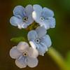 29  G White Flowers V