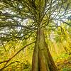 27  G Tree Up V