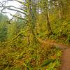 28  G Trail