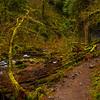 34  G Upper Latourell Falls