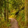 24  G Trail Up V
