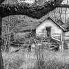 15  G Tree and Abandoned Home BW