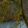 8  G Mossy Tree V