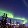 13  G Coldfoot Aurora