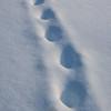 32  G Trail Near Coldfoot V