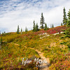 228  Naches Peak Trail