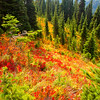 233  Naches Peak Trail Color