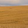 13  G Barn in Field