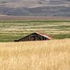 16  G Barn in Field