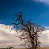 11  G Tree V