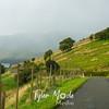 36  G  New Zealand Road