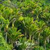40  G West Coast Trees