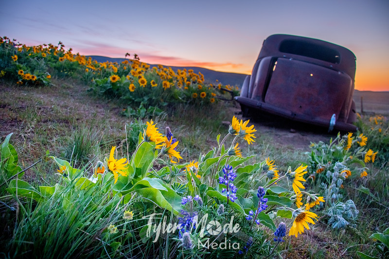 1  G The Old Car and Wildflowers