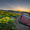 9  G The Old Car and Wildflowers