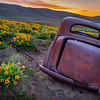7  G The Old Car and Wildflowers
