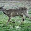 5  G Deer Running