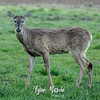 7  G Deer
