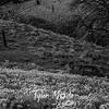 6  G Dalles Mountain Ranch Car BW