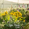 27  G Dalles Mountain Ranch Flowers and Fence