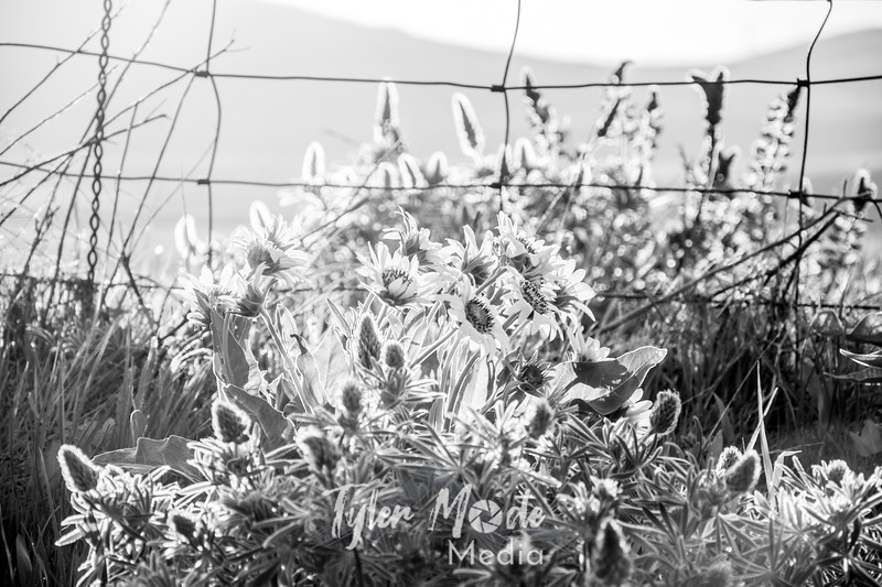 29  G Dalles Mountain Ranch Flowers and Fence BW