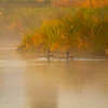 92  G Ridgefield Morning Reflections