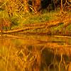 102  G Ridgefield Reflections