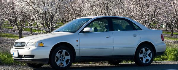 my car almond trees 7111 7112
