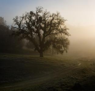 _MG_6989 tree in mist  cr