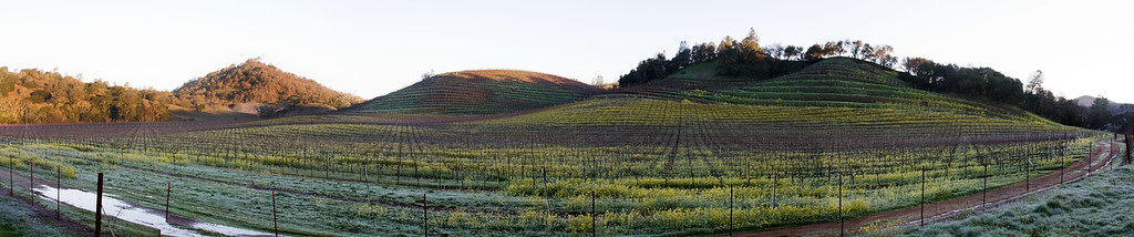 vinyard 6963-6967 flat crop