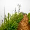 32  G Trail and Fog