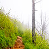 34  G Trail Fog Snag V