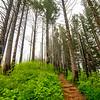 14  G Trail Through Forest V