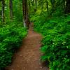 7  G Trail Through Forest