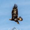 10  G Hawk V