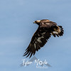 8  G Hawk